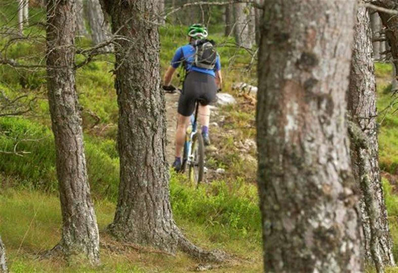 Forest car parks, toilets and bike trails closed