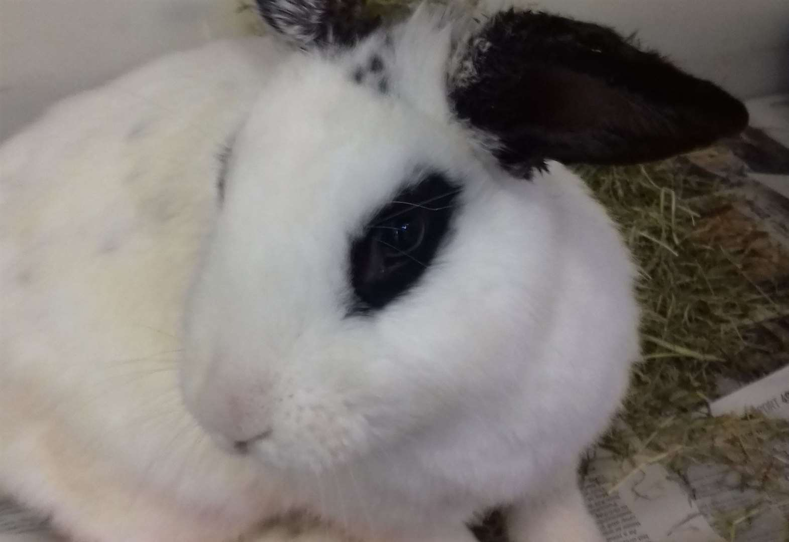 Scottish SPCA appeal for information after rabbits found in Inverness