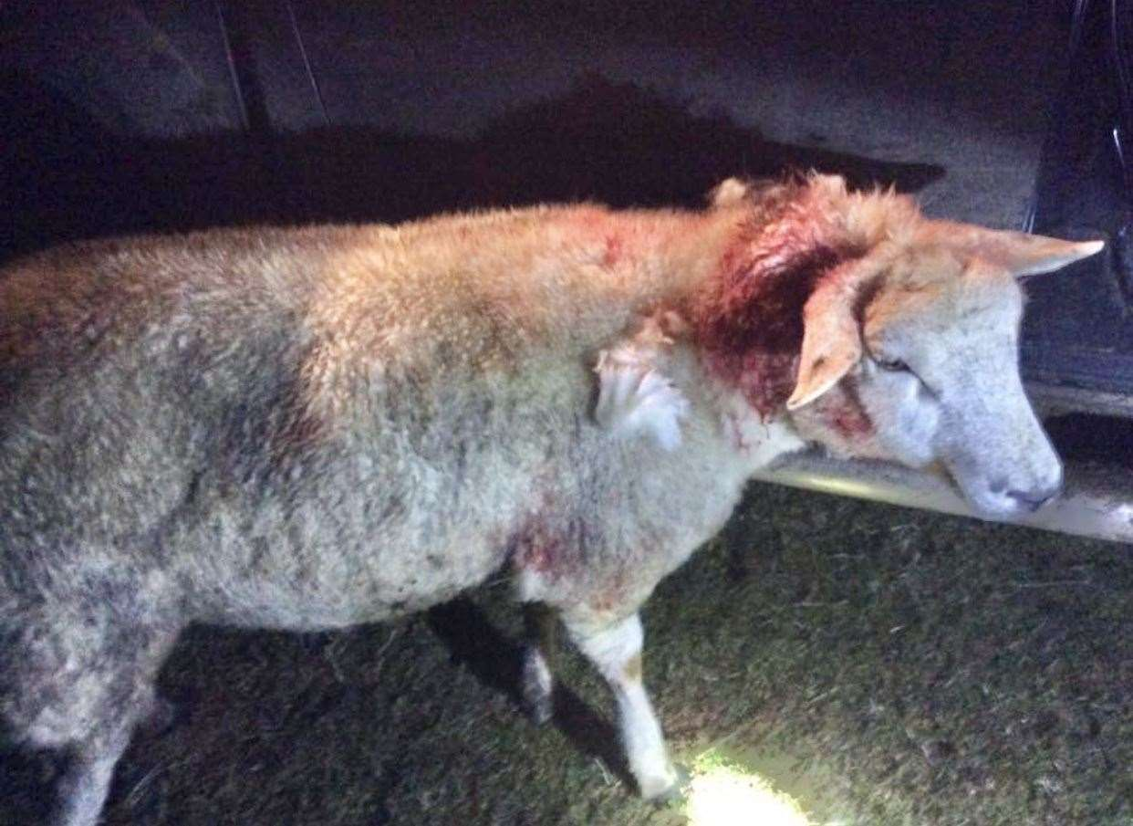 An image of the injured sheep was shared by the farmer on social media.