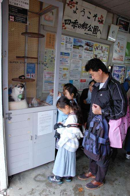 People come from miles to photograph the famous cat station master on the Wakayama Electric Railway