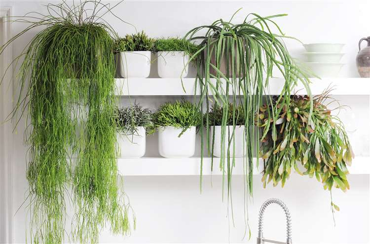 Five Trailing Houseplants And How To Care For Them