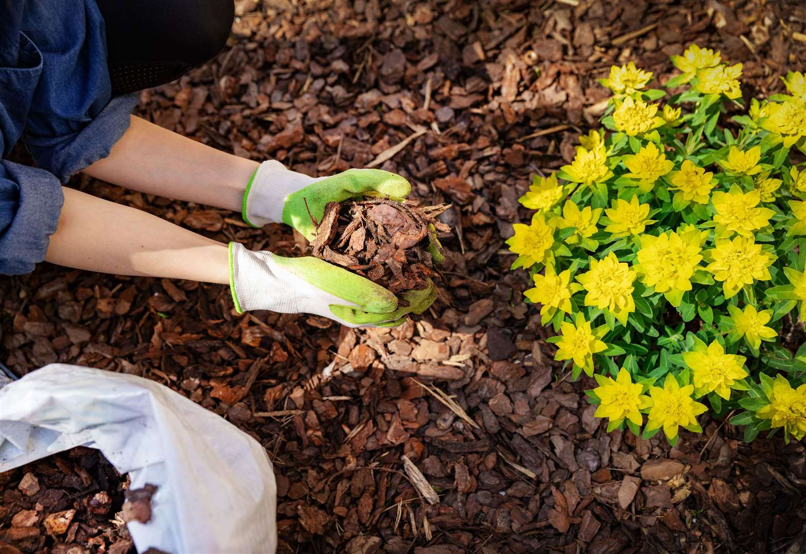 Five time-saving tips for busy gardeners